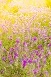 明亮的花在阳光下 免版税库存图片