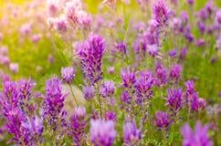 明亮的花在阳光下 免版税库存照片