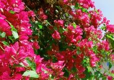 明亮的花在DonInthanon泰国 图库摄影