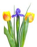 明亮的花束 免版税图库摄影