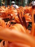 明亮的花美好的逗人喜爱的庭院围场 免版税库存照片
