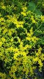 明亮的花黄色 免版税库存图片