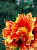 明亮的花 库存照片