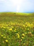 明亮的草原 免版税图库摄影