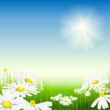 明亮的草甸夏天 免版税库存照片