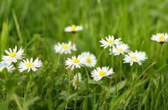 明亮的草甸好夏天 库存图片