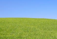 明亮的草甸 库存图片