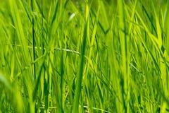 明亮的草绿色 图库摄影