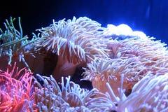 明亮的萤光珊瑚背景 免版税库存照片