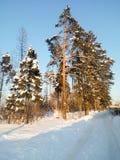 明亮的蓝天和树在欢乐雪穿戴在早晨阳光下 库存照片