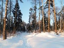 明亮的蓝天和树在欢乐雪穿戴在早晨阳光下 免版税库存照片