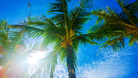 明亮的蓝天的可爱的看法通过棕榈树 库存图片