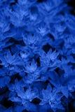 明亮的蓝色幻想背景 库存照片