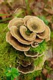 明亮的蘑菇 库存图片