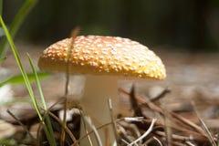 明亮的蘑菇 库存照片