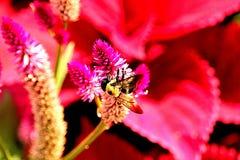 明亮的蜂和花 免版税库存照片