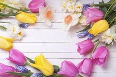 从明亮的郁金香和黄水仙的框架在白色woode开花 库存照片