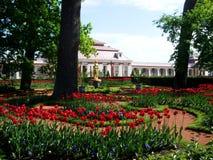 明亮的郁金香在公园增长 库存照片