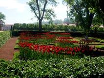 明亮的郁金香在公园增长 免版税图库摄影