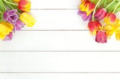 明亮的郁金香背景 库存照片