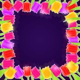 明亮的郁金香花框架 库存图片
