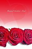 明亮的重点红色玫瑰华伦泰 图库摄影