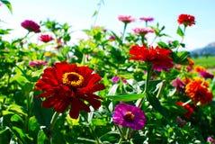 明亮的野花在纳帕谷 免版税图库摄影