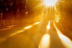 明亮的金黄阳光通过树发光在乡下公路 图库摄影