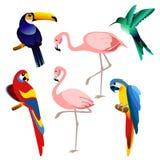 明亮的颜色异乎寻常的热带鸟的传染媒介例证在平的样式的白色背景设置了被隔绝 皇族释放例证