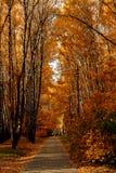 明亮的颜色秋天树 秋天横向 免版税库存图片
