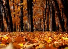 明亮的颜色秋天树 秋天横向 图库摄影