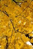 明亮的颜色秋天树 秋天横向 库存图片