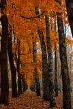 明亮的颜色秋天树 秋天横向 库存照片