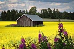 明亮的颜色芬兰夏天 库存照片