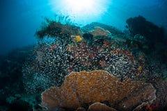 明亮的鱼和美丽的礁石在王侯Ampat 库存图片