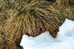 明亮的黄色干草一边用白雪,自然本底包括 免版税库存图片
