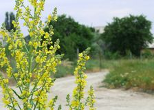 明亮的黄色狂放的领域花弄脏了夏天晴天countryroad和树宏指令长方形的背景乡下 免版税库存图片