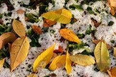 明亮的黄色秋天叶子。 库存图片