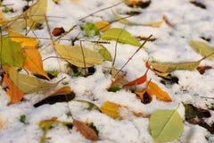 明亮的黄色秋天叶子。 免版税库存照片