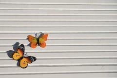 明亮的黄色红色蝴蝶的摄影图片在阳光下在自然白色木背景 库存图片