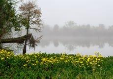 明亮的黄色雏菊补丁在泥沼的银行的格斯特海岛的路易斯安那 免版税库存照片