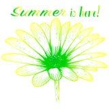 明亮的晴朗的明信片-春黄菊 免版税库存照片