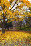 明亮的结构树黄色 库存图片