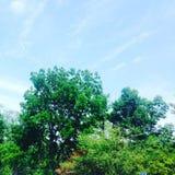 明亮的结构树 免版税库存照片