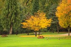 明亮的黄色树在一个公园在多云秋天天 库存图片