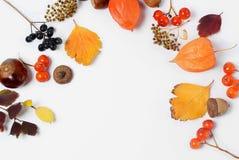 明亮的黄色秋叶、栗子、杉木锥体和橙色空泡在与拷贝空间的白色背景开花为 库存照片