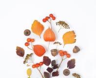 明亮的黄色秋叶、栗子、杉木锥体和橙色空泡在与拷贝空间的白色背景开花为 图库摄影