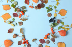 明亮的黄色秋叶、栗子、杉木锥体和橙色空泡在与拷贝空间的蓝色背景开花为 免版税库存图片