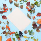 明亮的黄色秋叶、栗子、杉木锥体和橙色空泡在与拷贝空间的蓝色背景开花为 免版税库存照片