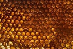 明亮的黄色蜂窝 免版税库存图片